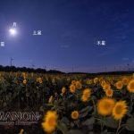 「ひまわり畑にかかる惑星のアーチ+月」