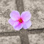 インスタ「萎え」、桜の文化、そして写真という文化