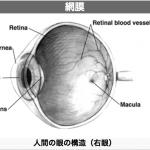 星をより良く見るために人間の眼の特性を知る